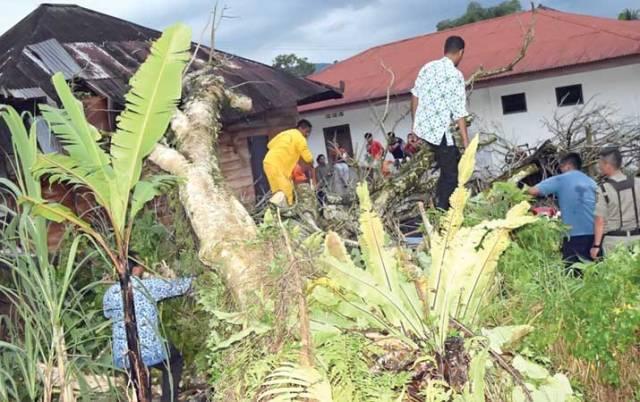 Petugas Badan Penanggulangan Bencana Daerah (BPBD) Taput memotong pohon yang menimpa rumah warga, akibat diterjang angin kencang.