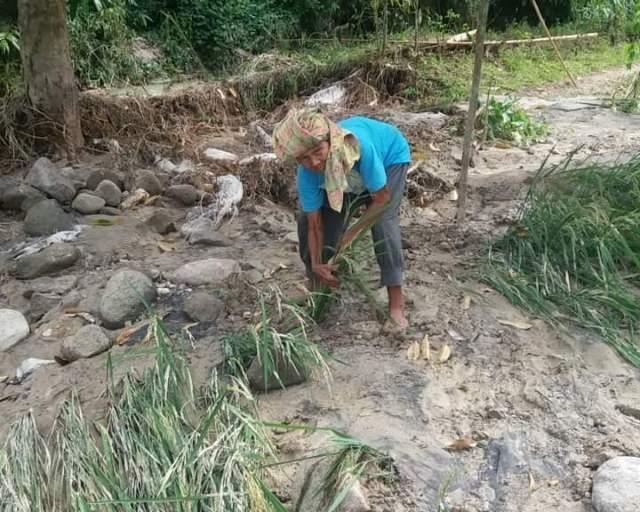 Oppung Boru James Pardede tertunduk di atas sawahnya yang sudah tertimbun tanah dan pasir bawaan banjir